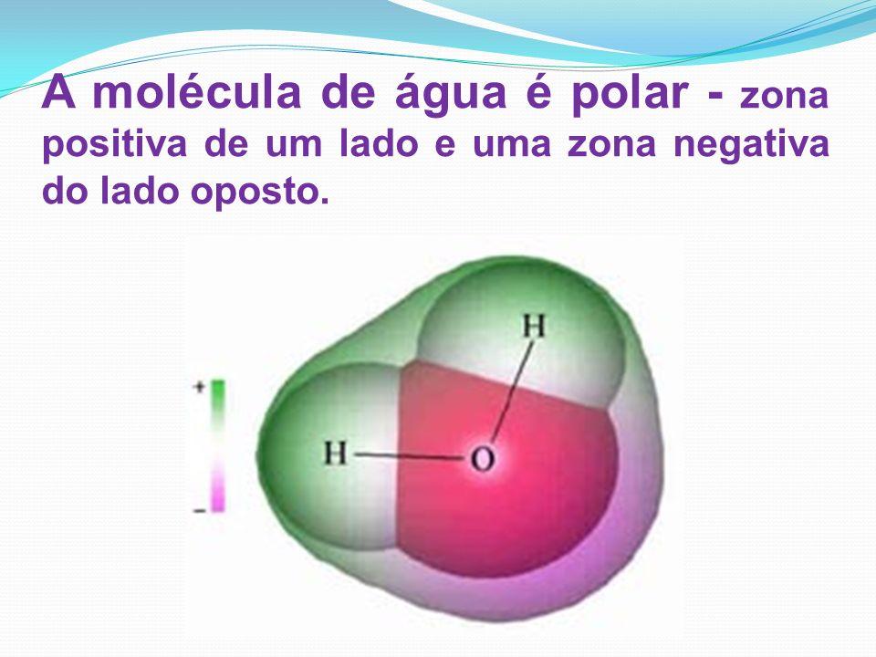 A molécula de água é polar - zona positiva de um lado e uma zona negativa do lado oposto.