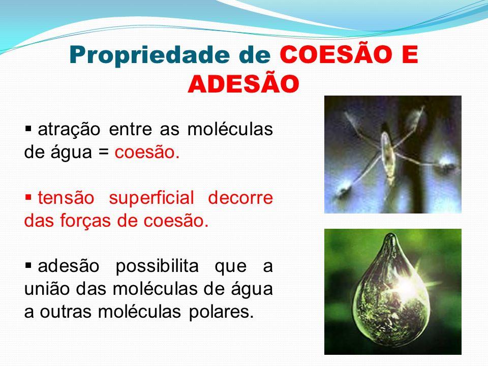 Propriedade de COESÃO E ADESÃO atração entre as moléculas de água = coesão. tensão superficial decorre das forças de coesão. adesão possibilita que a