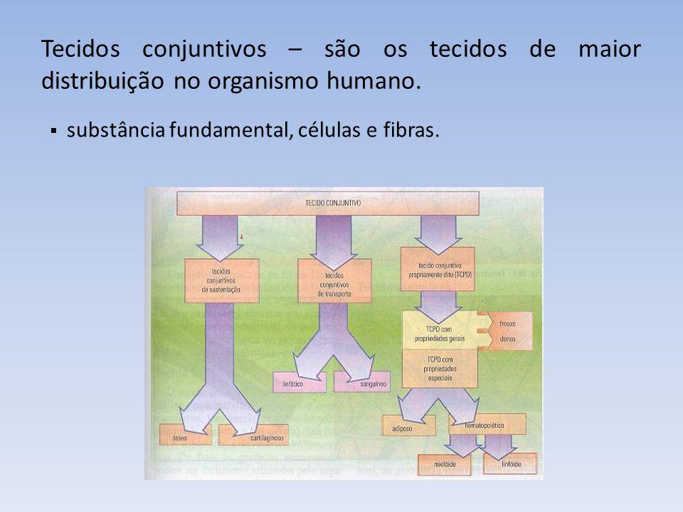 Fibras dos tecidos conjuntivos 1. Colágenas 2. Elásticas 3. Reticulares