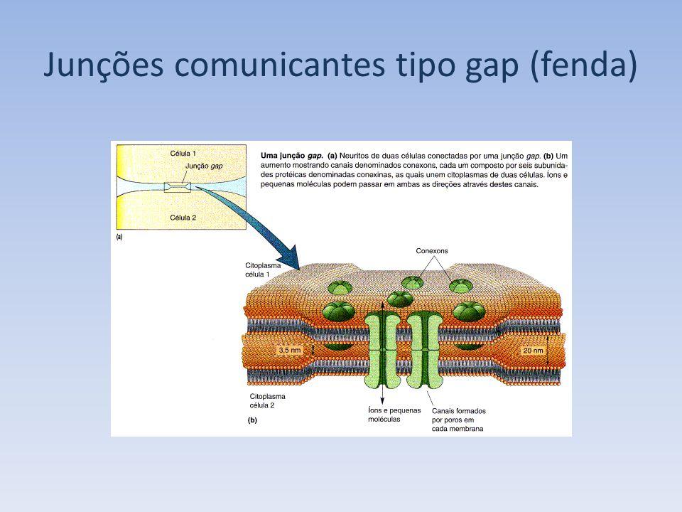 DIFERENCIAÇÕES DA MEMBRANA PLASMÁTICA DE CÉLULAS EPITELIAIS Microvilosidades – função de aumentar a superfície.