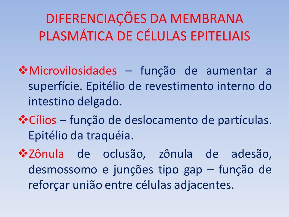 CLASSIFICAÇÃO DOS TECIDOS EPITELIAIS Endotélio dos vasos Pele Túbulos renais Bexiga urinária Estômago Fossas nasais