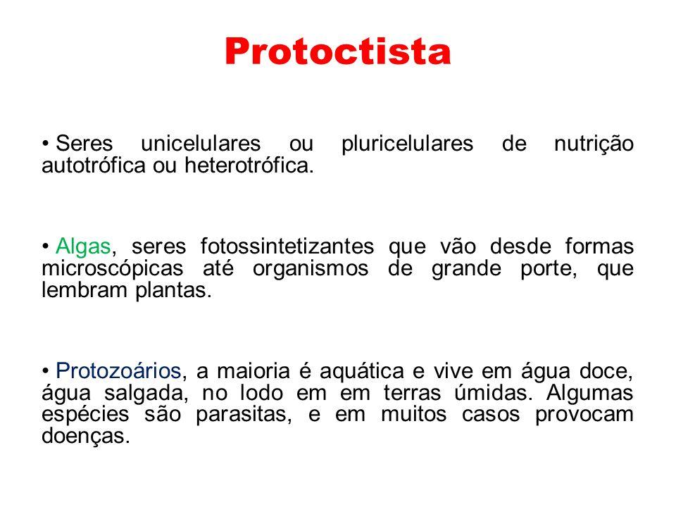 Classificação dos Protoctistas Grupos de ProtoctistasFilos Protoctistas autótrofos Unicelulares (algas ) Bacillariophyta (diatomáceas) Chrysophyta (algas douradas) Euglenophyta (euglenóides) Dinophyta (dinoflagelados) Protoctistas autótrofos Pluricelulares em grande maioria (algas) Chlorophyta (verdes) Phaeophyta (pardas ou marrons) Rhodophyta (vermelhas) Charophyta (carofíceas) Protoctistas heterótrofos Unicelulares (protozoários) Rhizopoda (amebas) Actinopoda (radiolários e heliozoários) Foraminifera (foraminíferos) Apicomplexa (esporozoários) Zoomastigophora (flagelados) Ciliophora (ciliados)
