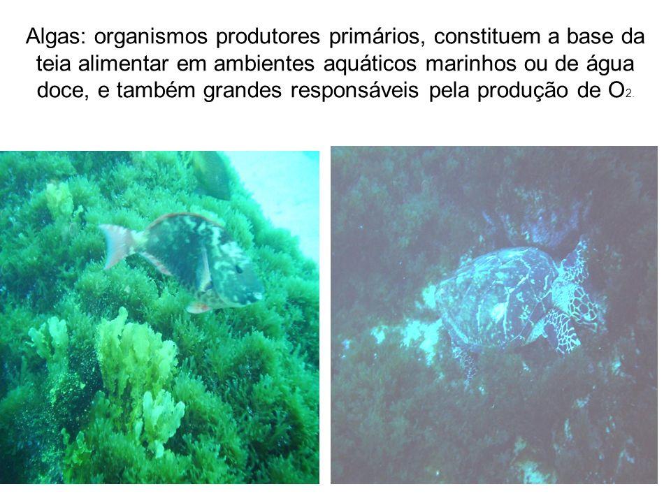 Algas: organismos produtores primários, constituem a base da teia alimentar em ambientes aquáticos marinhos ou de água doce, e também grandes responsá