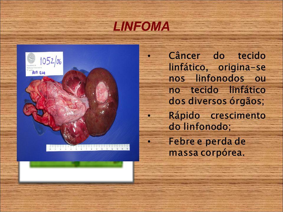 LINFOMA Câncer do tecido linfático, origina-se nos linfonodos ou no tecido linfático dos diversos órgãos; Rápido crescimento do linfonodo; Febre e perda de massa corpórea.