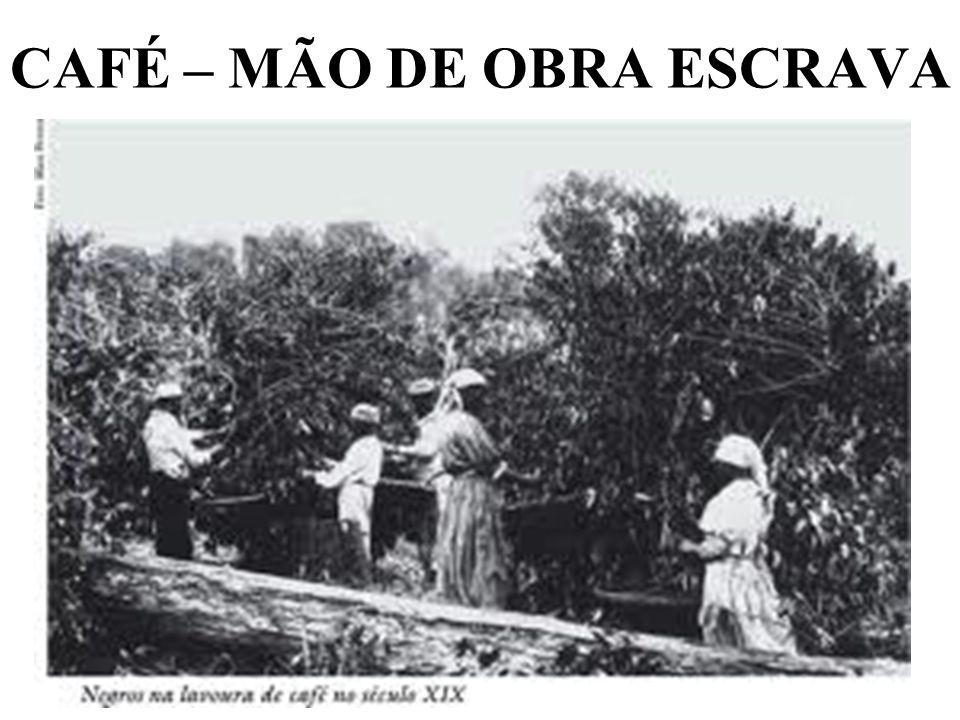 CAFÉ – MÃO DE OBRA ESCRAVA