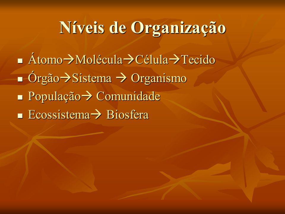 Níveis de Organização Átomo Molécula Célula Tecido Átomo Molécula Célula Tecido Órgão Sistema Organismo Órgão Sistema Organismo População Comunidade P