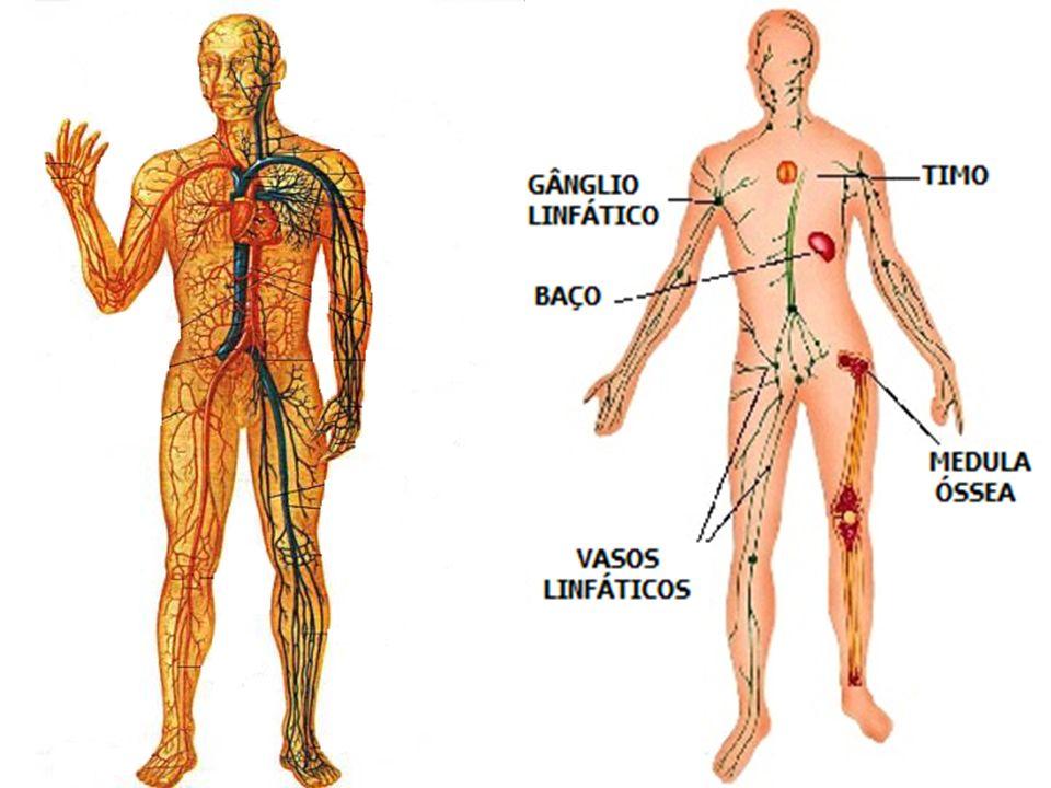 COMPONENTES DO SISTEMA CARDIOVASCULAR Coração Vasos sanguíneos: artérias e veias Sangue Vasos linfáticos Linfa.