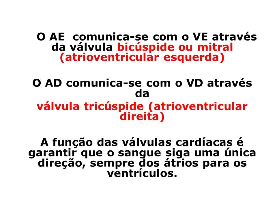O AE comunica-se com o VE através da válvula bicúspide ou mitral (atrioventricular esquerda) O AD comunica-se com o VD através da válvula tricúspide (atrioventricular direita) A função das válvulas cardíacas é garantir que o sangue siga uma única direção, sempre dos átrios para os ventrículos.