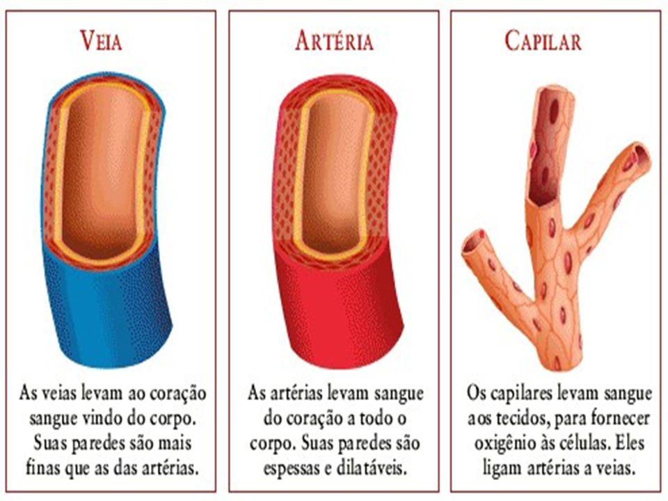 ARTÉRIAS Vasos que saem do coração levando sangue para os órgãos e tecidos do corpo. Três camadas: Interna - Endotélio Intermediária - Túnica média (t