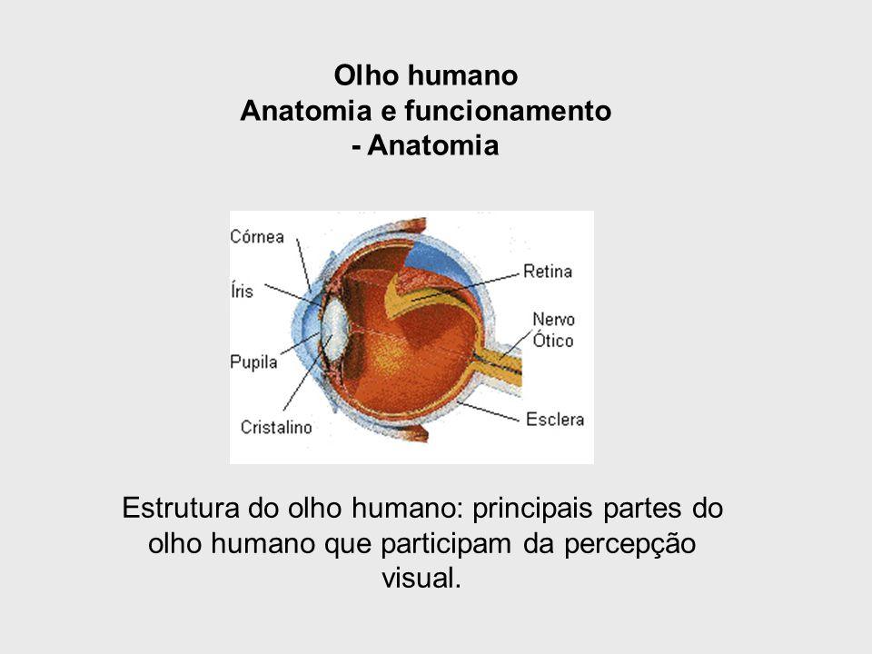 Olho humano Anatomia e funcionamento - Anatomia Estrutura do olho humano: principais partes do olho humano que participam da percepção visual.