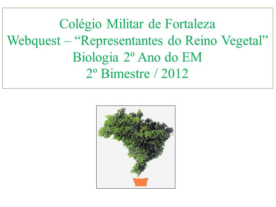 Colégio Militar de Fortaleza Webquest – Representantes do Reino Vegetal Biologia 2º Ano do EM 2º Bimestre / 2012