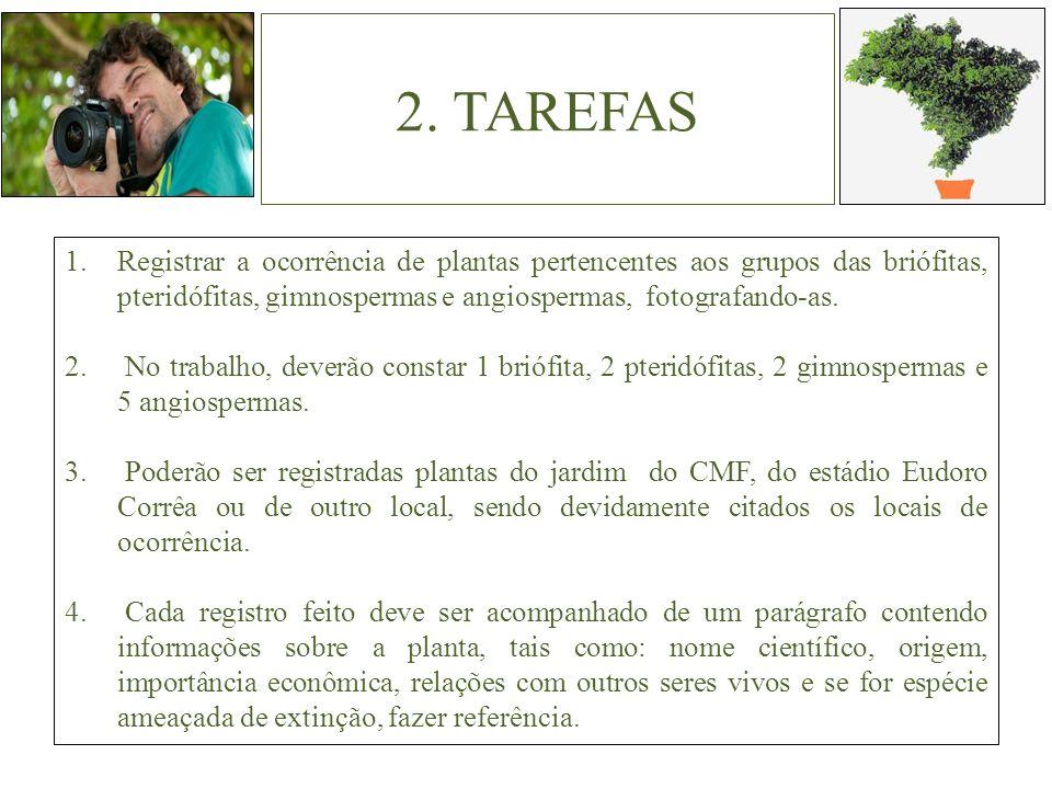2. TAREFAS 1.Registrar a ocorrência de plantas pertencentes aos grupos das briófitas, pteridófitas, gimnospermas e angiospermas, fotografando-as. 2. N