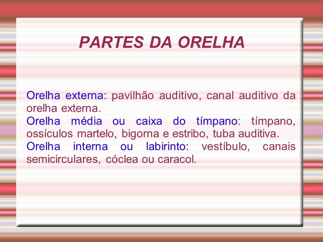 PARTES DA ORELHA Orelha externa: pavilhão auditivo, canal auditivo da orelha externa. Orelha média ou caixa do tímpano: tímpano, ossículos martelo, bi