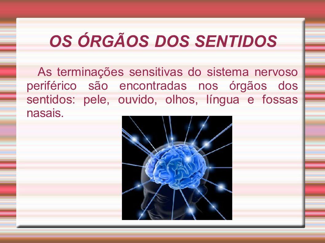OS ÓRGÃOS DOS SENTIDOS As terminações sensitivas do sistema nervoso periférico são encontradas nos órgãos dos sentidos: pele, ouvido, olhos, língua e