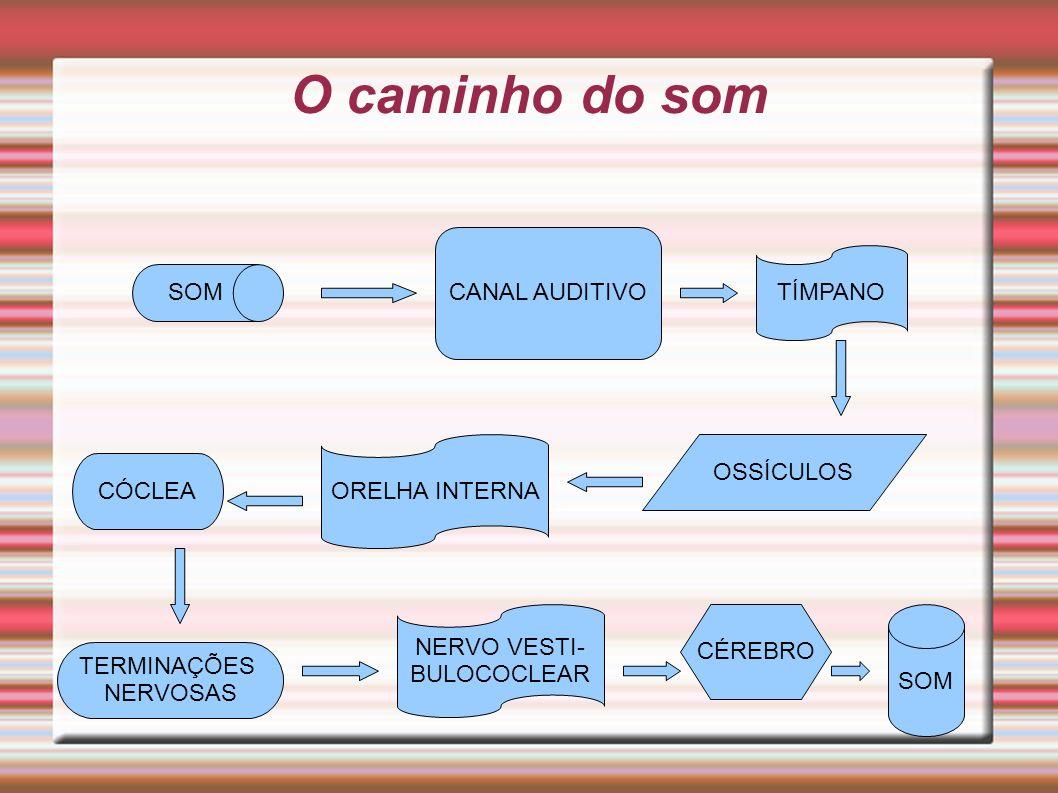 O caminho do som SOM CANAL AUDITIVO TÍMPANO OSSÍCULOS ORELHA INTERNA CÓCLEA TERMINAÇÕES NERVOSAS NERVO VESTI- BULOCOCLEAR CÉREBRO SOM
