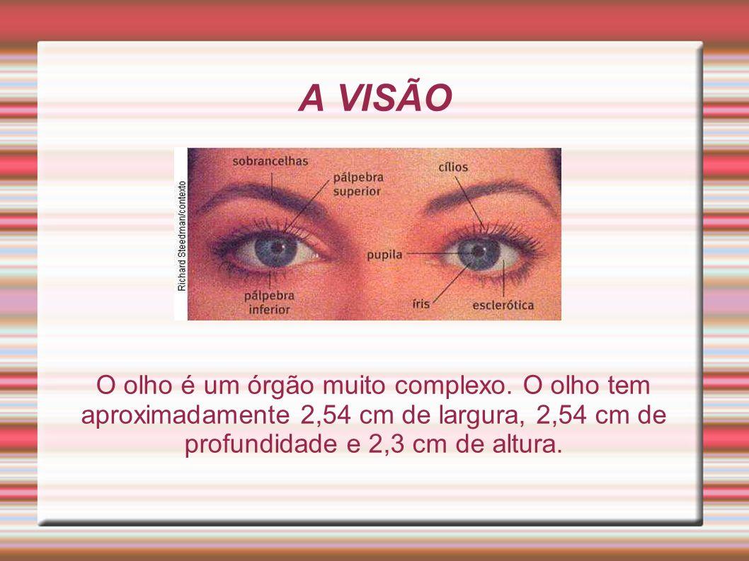 A VISÃO O olho é um órgão muito complexo. O olho tem aproximadamente 2,54 cm de largura, 2,54 cm de profundidade e 2,3 cm de altura.