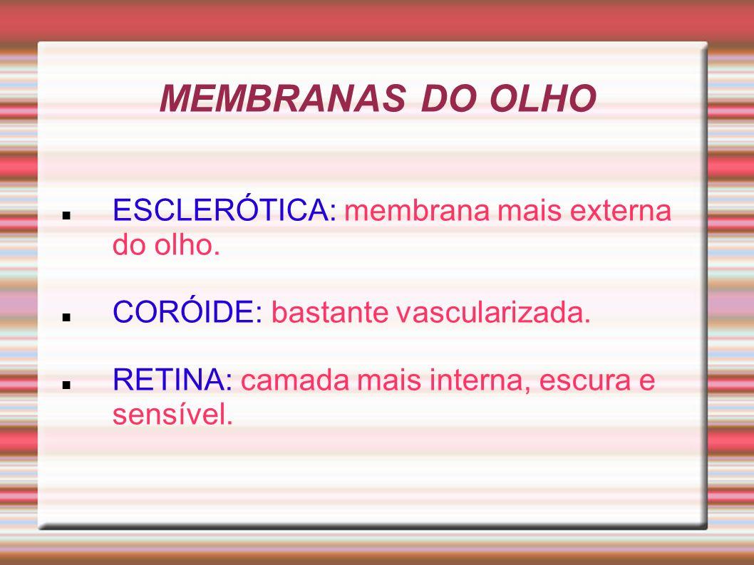 MEMBRANAS DO OLHO ESCLERÓTICA: membrana mais externa do olho. CORÓIDE: bastante vascularizada. RETINA: camada mais interna, escura e sensível.