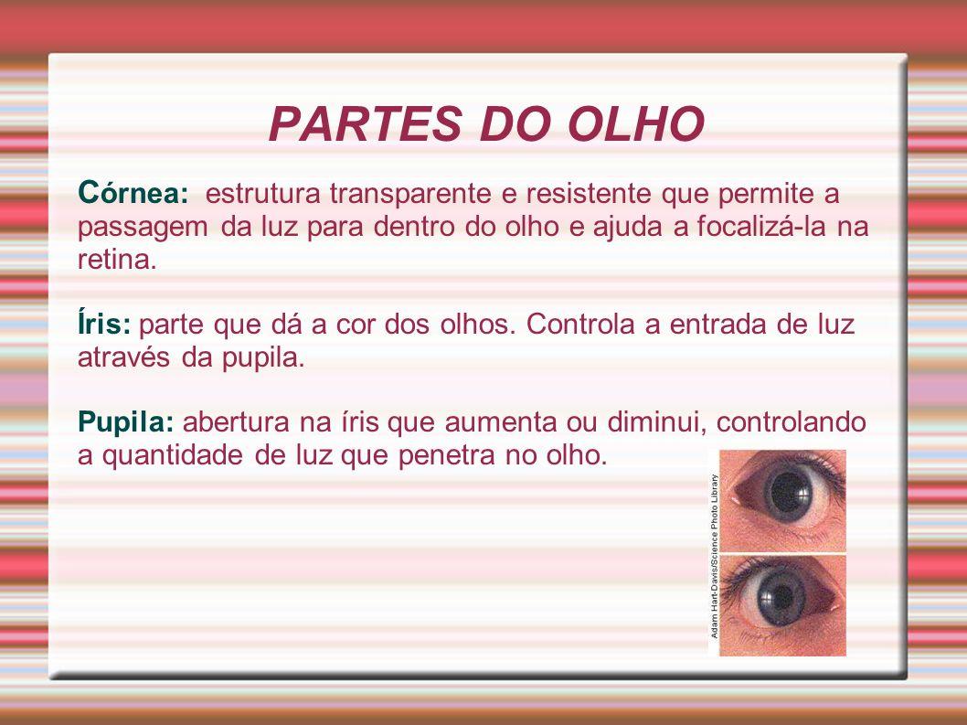 C órnea: estrutura transparente e resistente que permite a passagem da luz para dentro do olho e ajuda a focalizá-la na retina. Íris: parte que dá a c