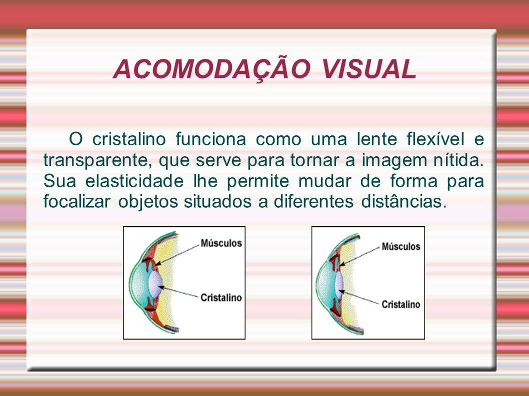 ACOMODAÇÃO VISUAL O cristalino funciona como uma lente flexível e transparente, que serve para tornar a imagem nítida. Sua elasticidade lhe permite mu