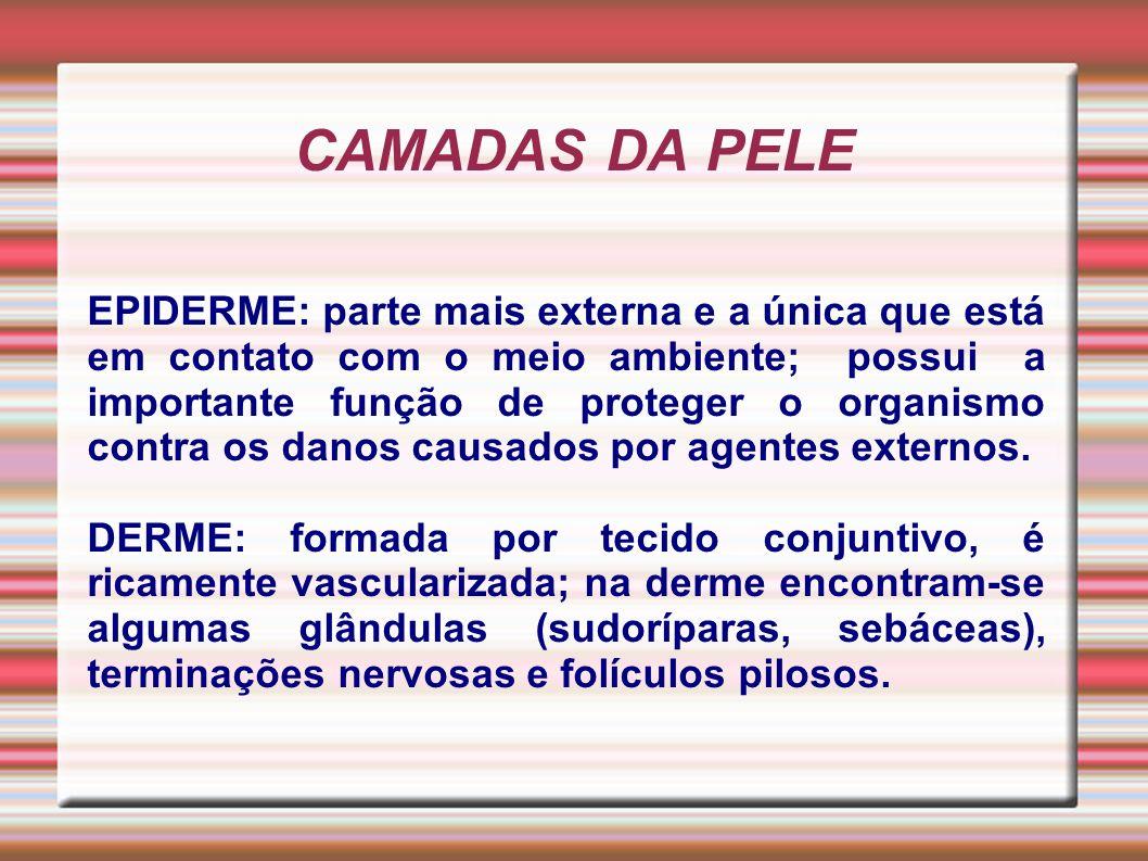 CAMADAS DA PELE EPIDERME: parte mais externa e a única que está em contato com o meio ambiente; possui a importante função de proteger o organismo con
