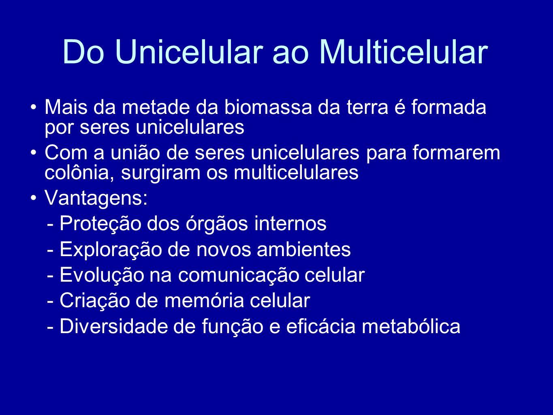 Do Unicelular ao Multicelular Mais da metade da biomassa da terra é formada por seres unicelulares Com a união de seres unicelulares para formarem col