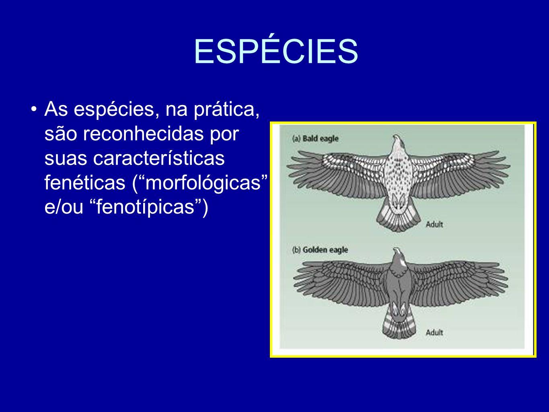 ESPÉCIES As espécies, na prática, são reconhecidas por suas características fenéticas (morfológicas e/ou fenotípicas)