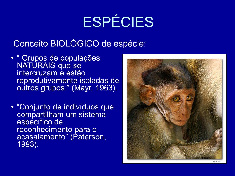 ESPÉCIES Conceito BIOLÓGICO de espécie: Grupos de populações NATURAIS que se intercruzam e estão reprodutivamente isoladas de outros grupos. (Mayr, 19