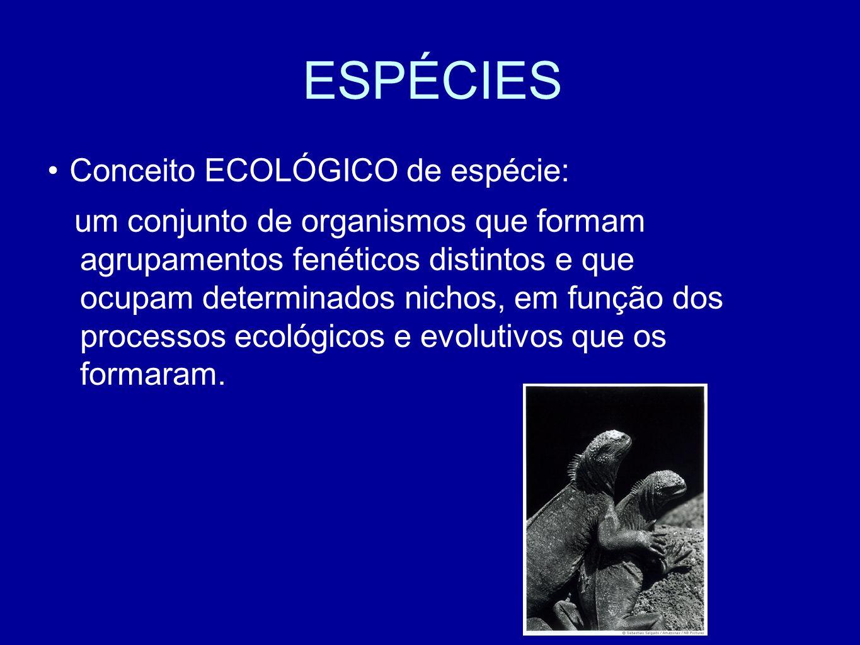 ESPÉCIES Conceito ECOLÓGICO de espécie: um conjunto de organismos que formam agrupamentos fenéticos distintos e que ocupam determinados nichos, em função dos processos ecológicos e evolutivos que os formaram.