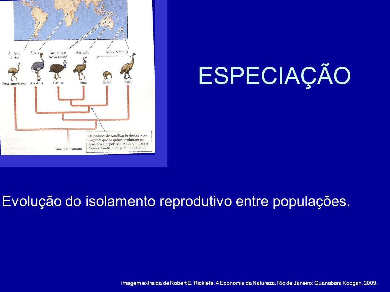 Evolução do isolamento reprodutivo entre populações. ESPECIAÇÃO Imagem extraída de Robert E. Ricklefs. A Economia da Natureza. Rio de Janeiro: Guanaba