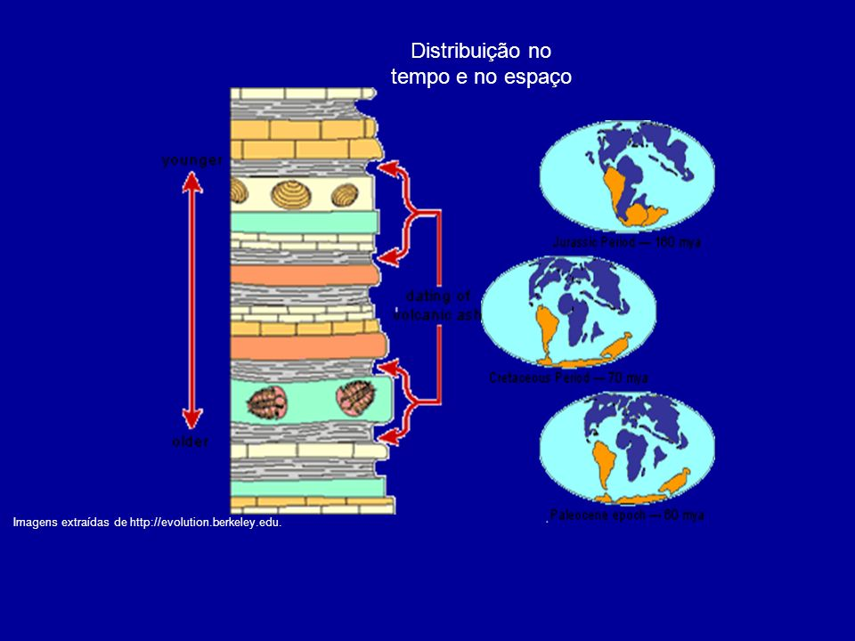 Imagens extraídas de http://evolution.berkeley.edu. Distribuição no tempo e no espaço