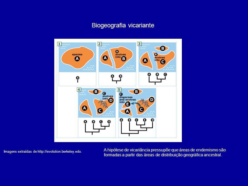 Biogeografia vicariante Imagens extraídas de http://evolution.berkeley.edu. A hipótese de vicariância pressupõe que áreas de endemismo são formadas a