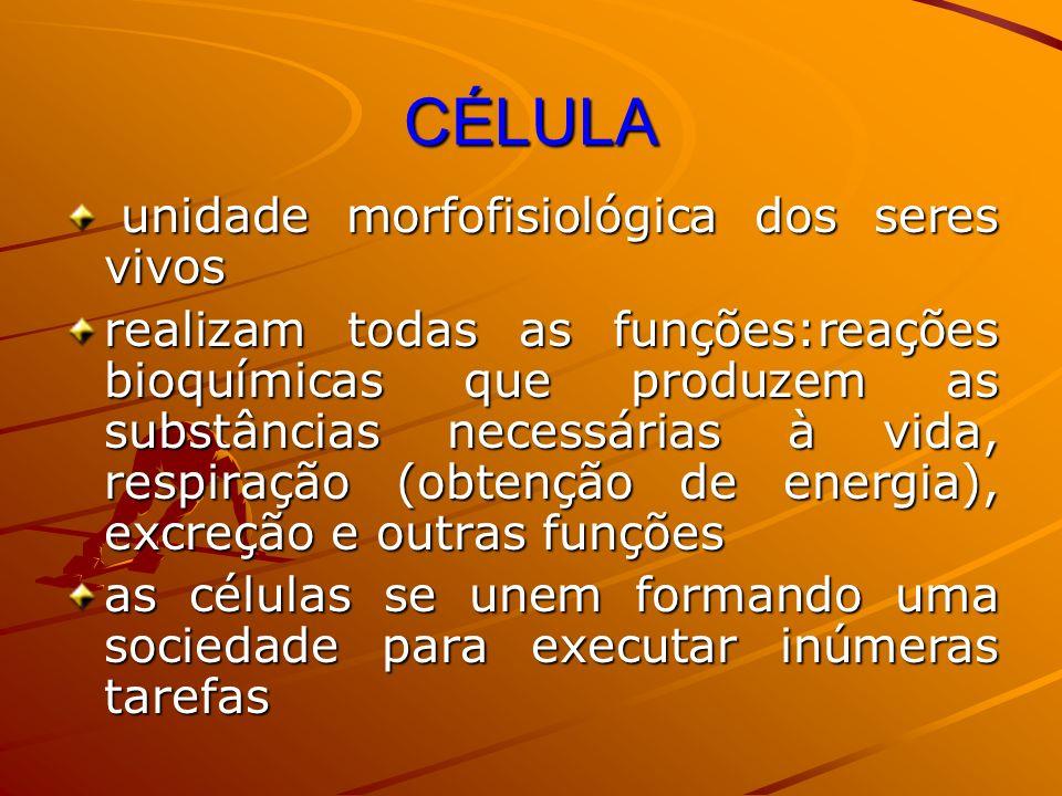 CÉLULA unidade morfofisiológica dos seres vivos unidade morfofisiológica dos seres vivos realizam todas as funções:reações bioquímicas que produzem as