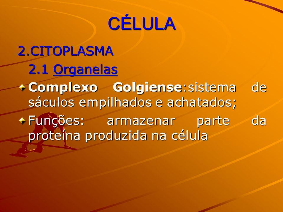 CÉLULA 2.CITOPLASMA 2.1 Organelas Complexo Golgiense:sistema de sáculos empilhados e achatados; Funções: armazenar parte da proteína produzida na célu