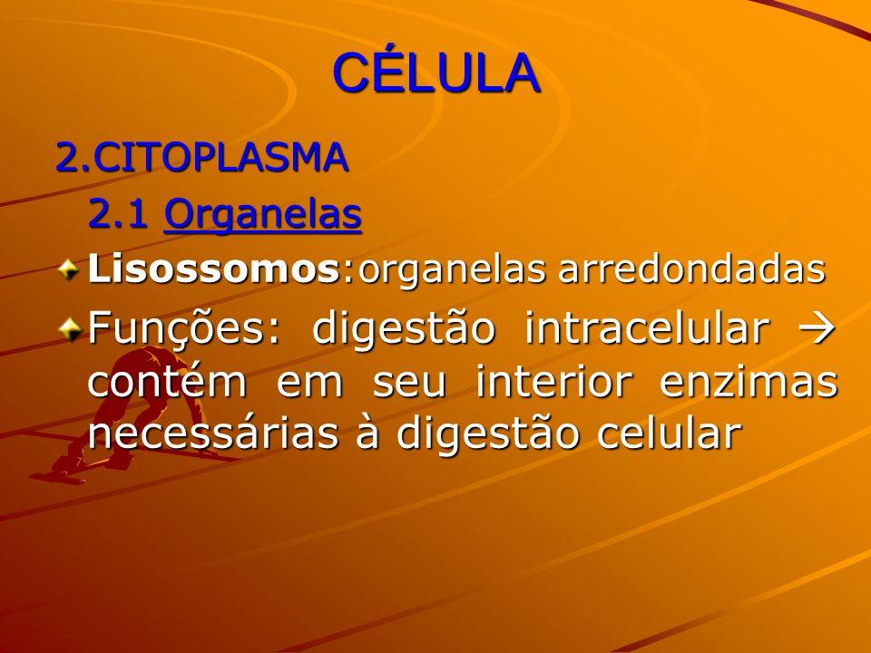CÉLULA 2.CITOPLASMA 2.1 Organelas Lisossomos:organelas arredondadas Funções: digestão intracelular contém em seu interior enzimas necessárias à digest