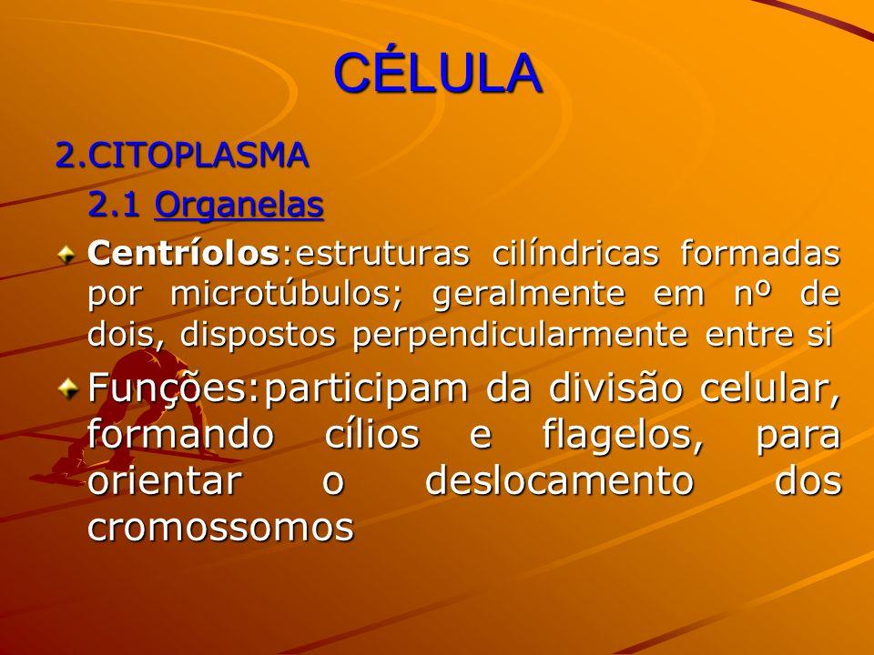 CÉLULA 2.CITOPLASMA 2.1 Organelas Centríolos:estruturas cilíndricas formadas por microtúbulos; geralmente em nº de dois, dispostos perpendicularmente
