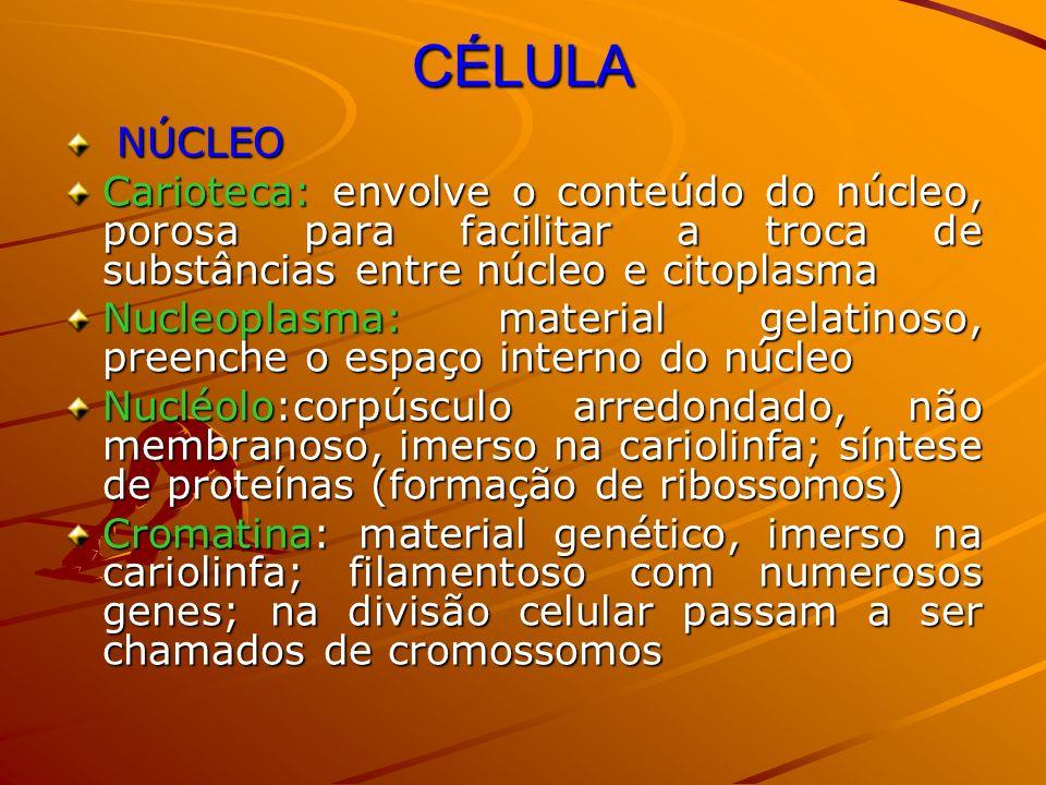 CÉLULA NÚCLEO NÚCLEO Carioteca: envolve o conteúdo do núcleo, porosa para facilitar a troca de substâncias entre núcleo e citoplasma Nucleoplasma: mat