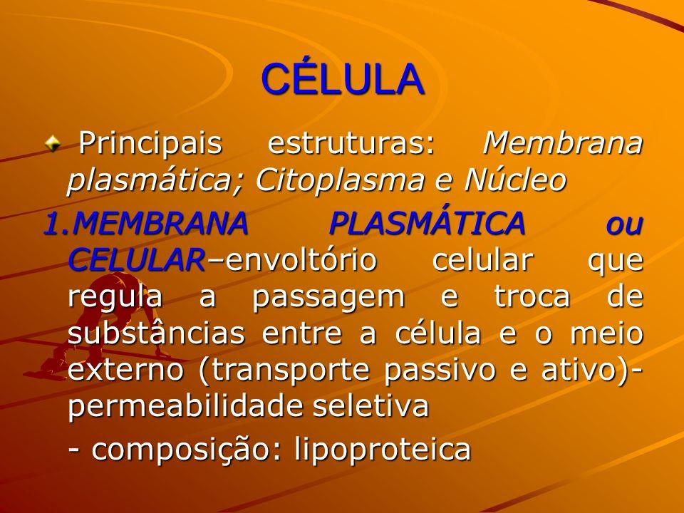 CÉLULA Principais estruturas: Membrana plasmática; Citoplasma e Núcleo Principais estruturas: Membrana plasmática; Citoplasma e Núcleo 1.MEMBRANA PLAS
