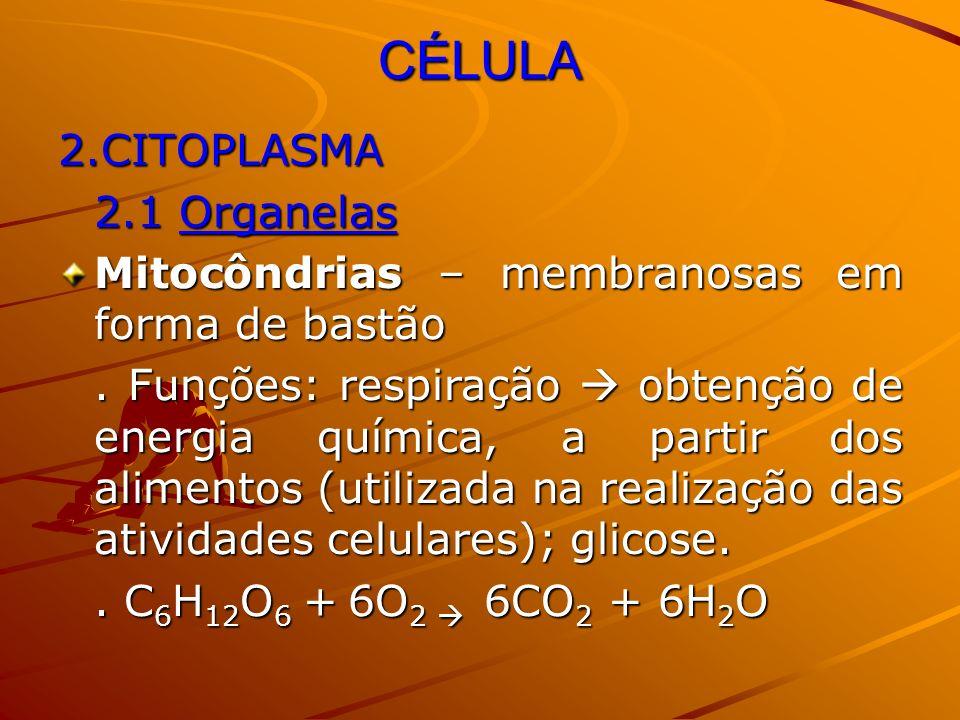 CÉLULA 2.CITOPLASMA 2.1 Organelas Mitocôndrias – membranosas em forma de bastão. Funções: respiração obtenção de energia química, a partir dos aliment