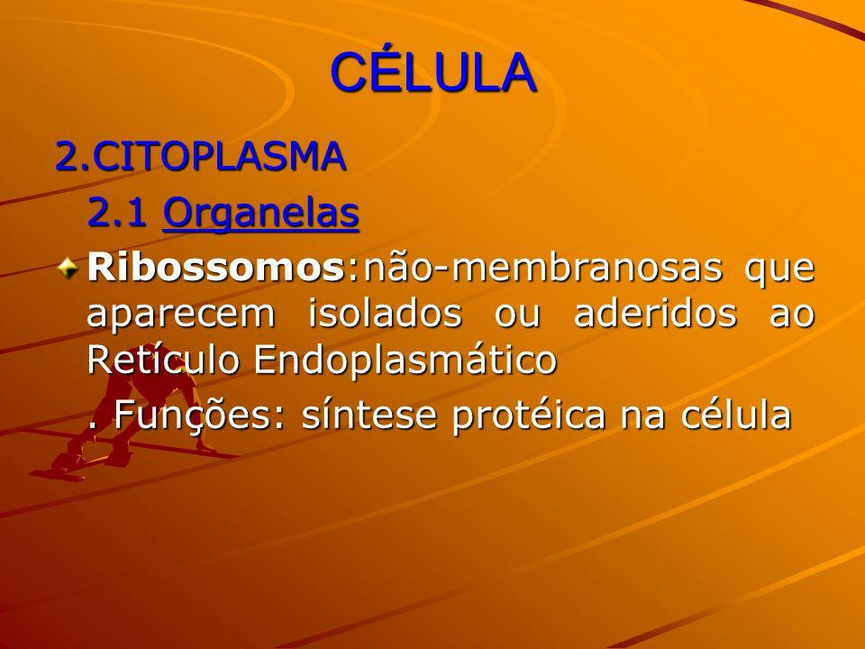 CÉLULA 2.CITOPLASMA 2.1 Organelas Ribossomos:não-membranosas que aparecem isolados ou aderidos ao Retículo Endoplasmático. Funções: síntese protéica n