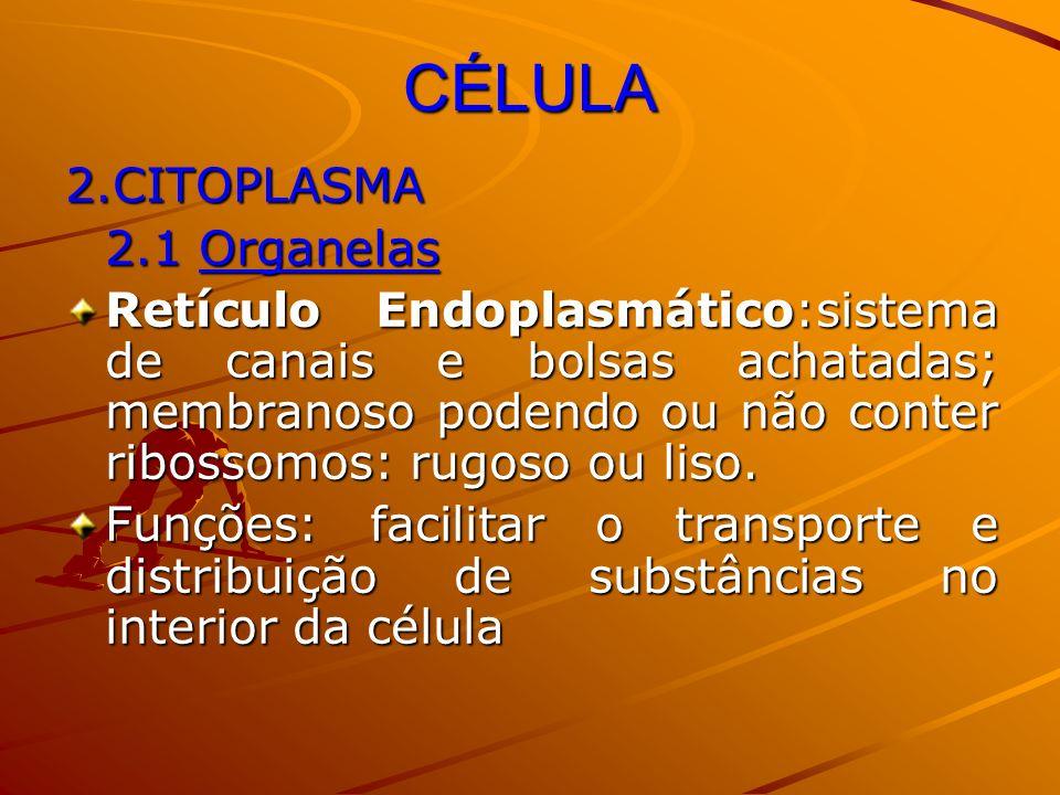 CÉLULA 2.CITOPLASMA 2.1 Organelas Retículo Endoplasmático:sistema de canais e bolsas achatadas; membranoso podendo ou não conter ribossomos: rugoso ou