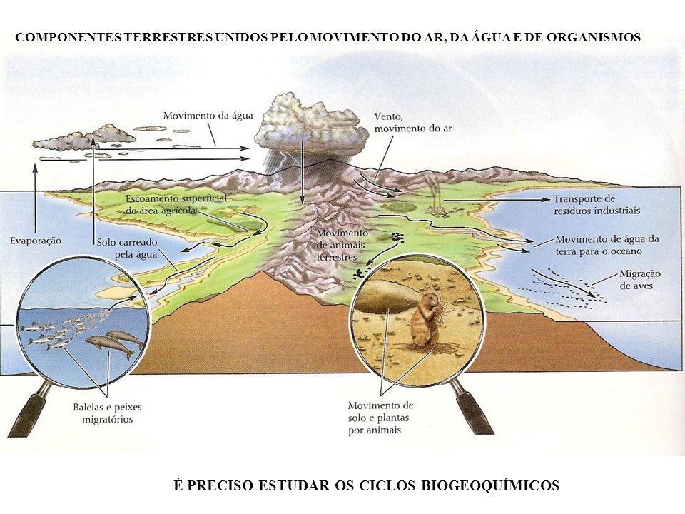 COMPONENTES TERRESTRES UNIDOS PELO MOVIMENTO DO AR, DA ÁGUA E DE ORGANISMOS É PRECISO ESTUDAR OS CICLOS BIOGEOQUÍMICOS