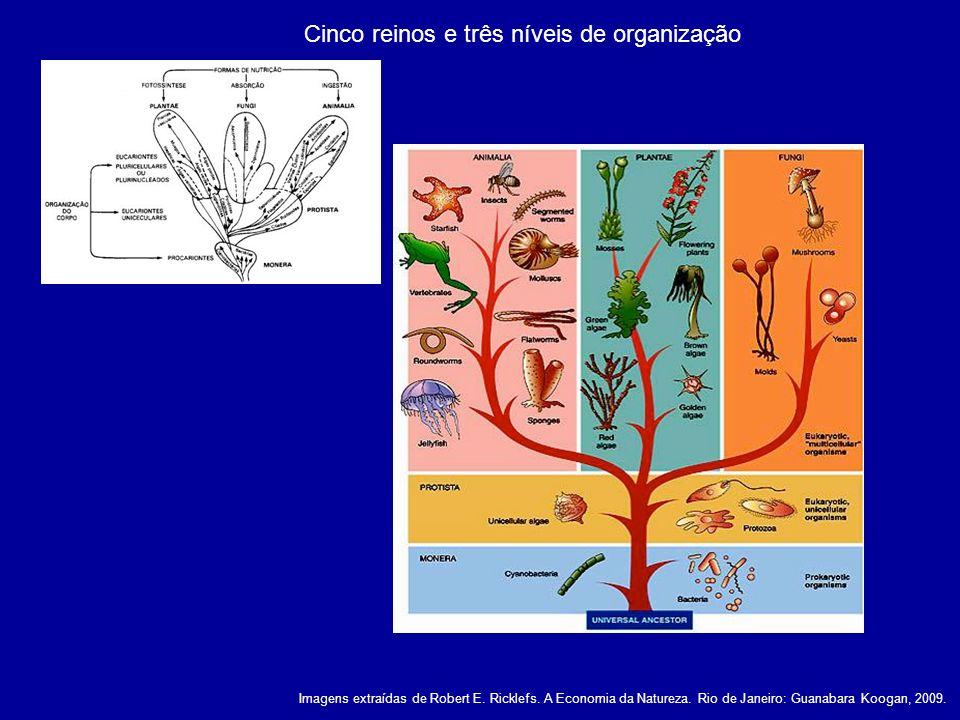 Fatores que influenciam a diversidade de espécies local e regional a quantidade de espécies aumenta no nível regional através da especiação e da imigração Extinção maciça Seleção de habitat Como as espécies tendem a ser especialistas de habitat, a seleção de habitat conecta as diversidades local e regional Diversidade local Probabilidade de extinção Exclusão predatória Exclusão competitiva As interações ecológicas influenciam a diversidade nos níveis locais Predatismo X Parasitismo Comensalismo X Mutualismo