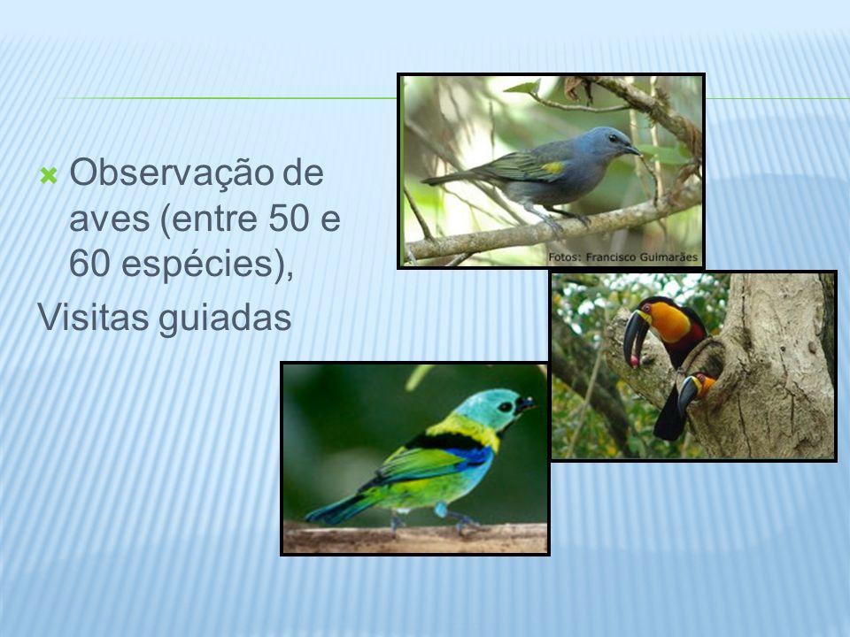 Observação de aves (entre 50 e 60 espécies), Visitas guiadas