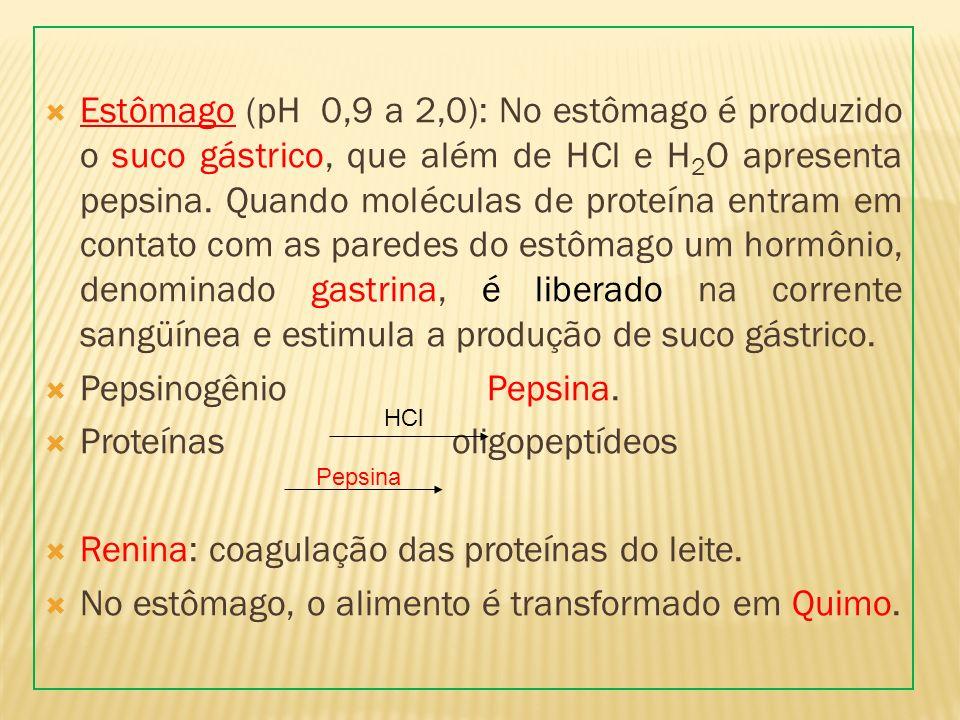 Estômago (pH 0,9 a 2,0): No estômago é produzido o suco gástrico, que além de HCl e H 2 O apresenta pepsina. Quando moléculas de proteína entram em co