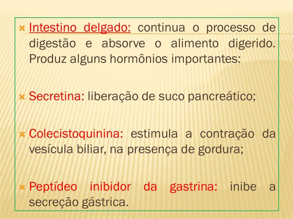 Intestino delgado: continua o processo de digestão e absorve o alimento digerido. Produz alguns hormônios importantes: Secretina: liberação de suco pa