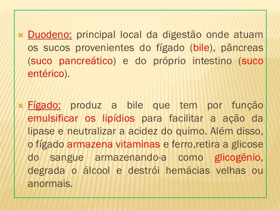 Duodeno: principal local da digestão onde atuam os sucos provenientes do fígado (bile), pâncreas (suco pancreático) e do próprio intestino (suco entér