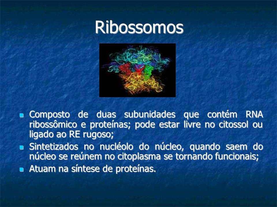 Ribossomos Composto de duas subunidades que contém RNA ribossômico e proteínas; pode estar livre no citossol ou ligado ao RE rugoso; Composto de duas
