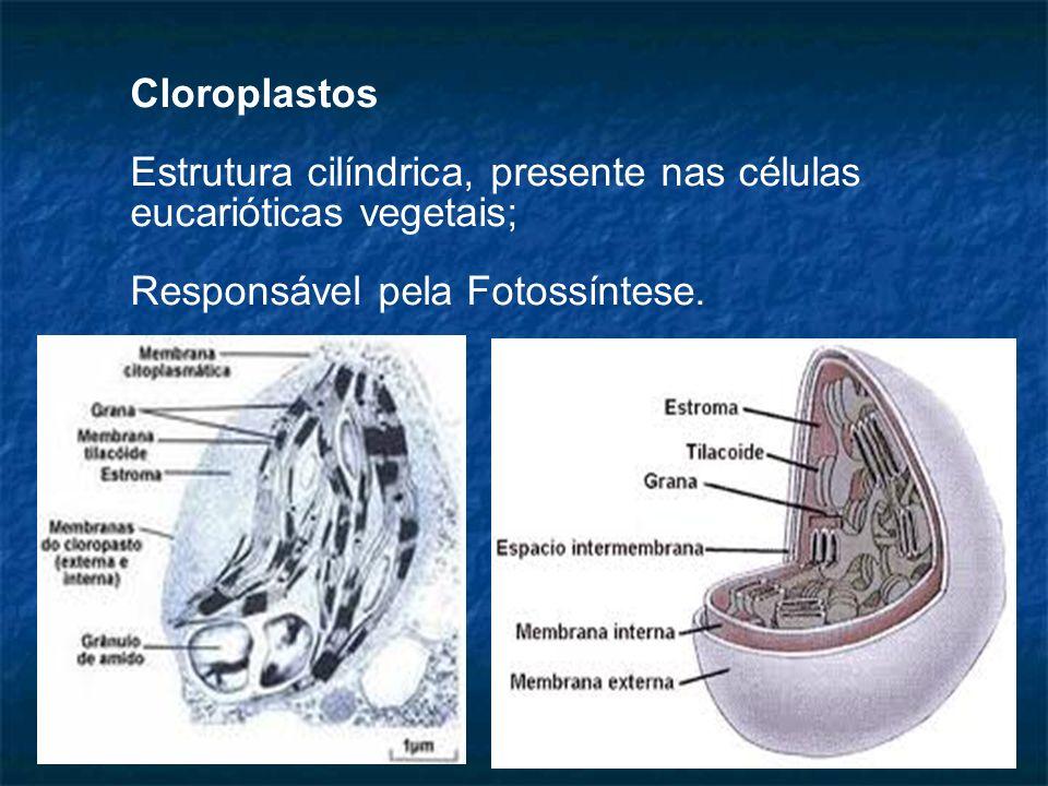 Cloroplastos Estrutura cilíndrica, presente nas células eucarióticas vegetais; Responsável pela Fotossíntese.