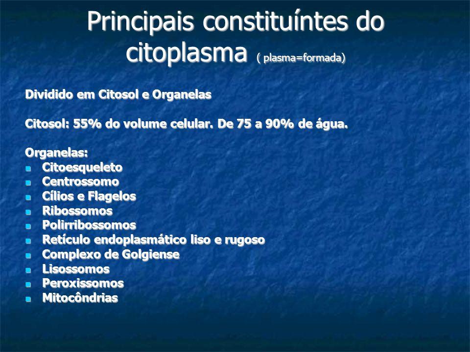 Principais constituíntes do citoplasma ( plasma=formada) Dividido em Citosol e Organelas Citosol: 55% do volume celular. De 75 a 90% de água. Organela