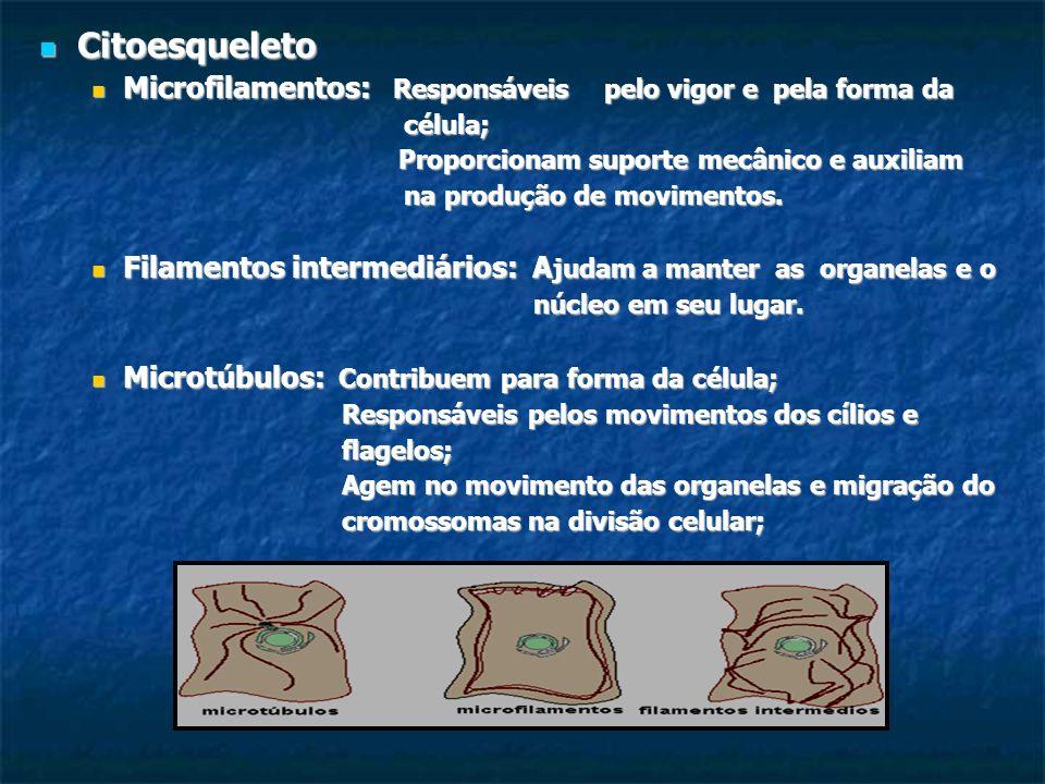Citoesqueleto Citoesqueleto Microfilamentos: Responsáveispelo vigor e pela forma da Microfilamentos: Responsáveispelo vigor e pela forma da célula; cé